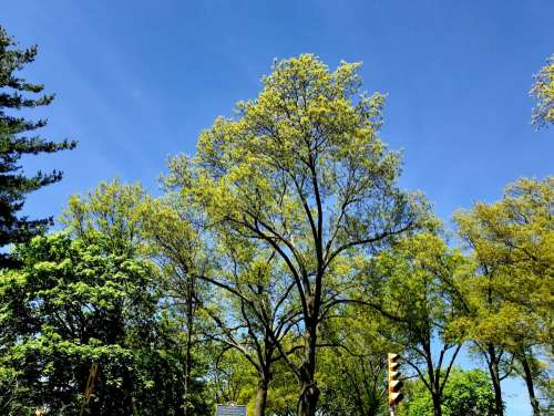 Green Leaves on Trees
