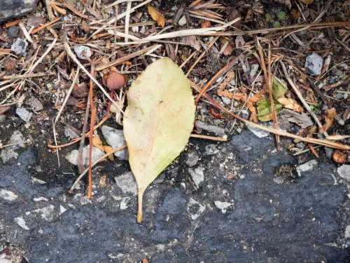 Leaf on Stone Concrete and Sticks