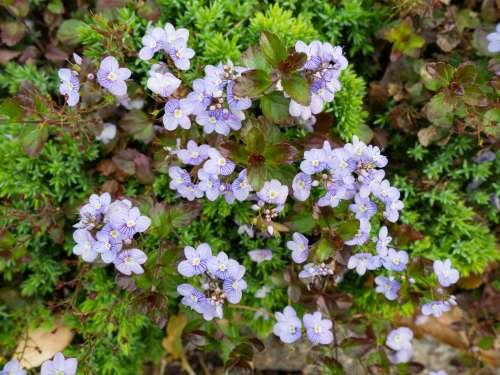 Purple Flowers in Garden