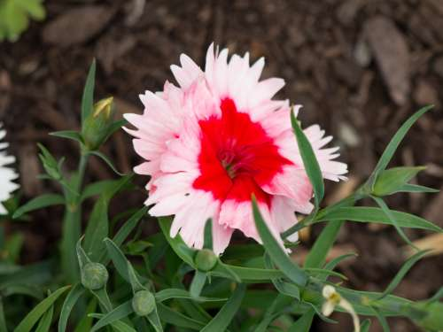 Red and White Flower in Garden