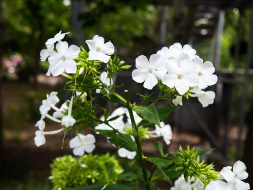 White Flowers in Shadows