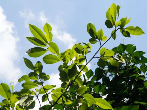 Green Leaves and Blue Sky
