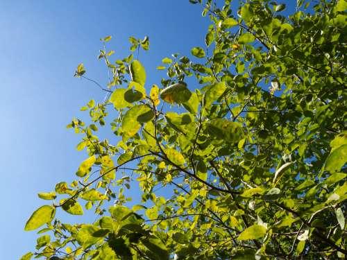Leaves on Tree Over Blue Sky