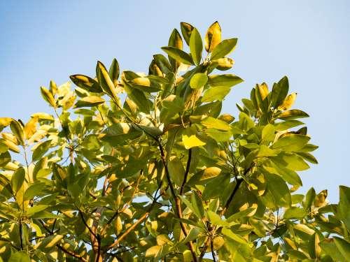 Tree Leaves Under Blue Sky