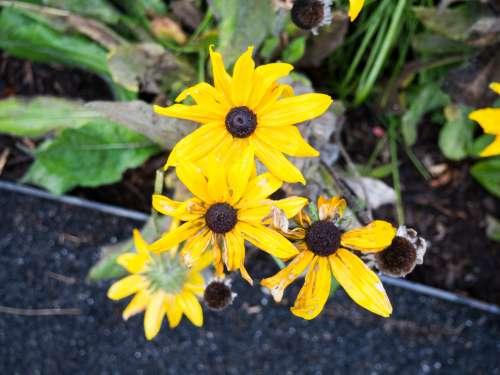 Three Yellow Flowers in Focus