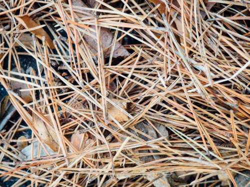 Fallen Pine Leaves on Concrete