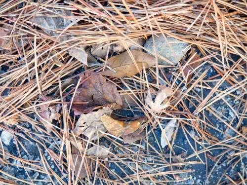 Leaves on Granite