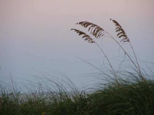 Sea ocean dune sea oats beach