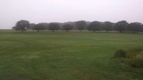 Franklin Park Fog Trees Outdoors