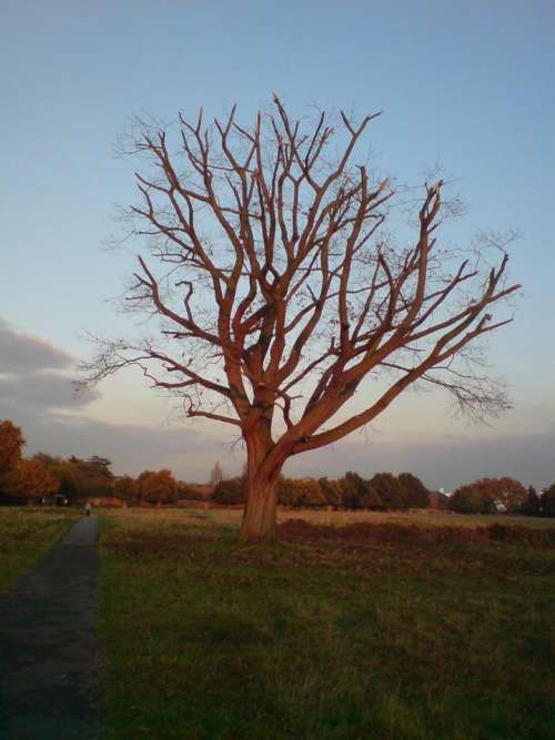 tree bare autumn winter sunset