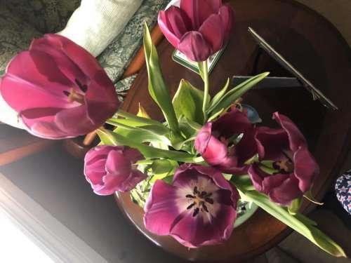 Floral flowers flower