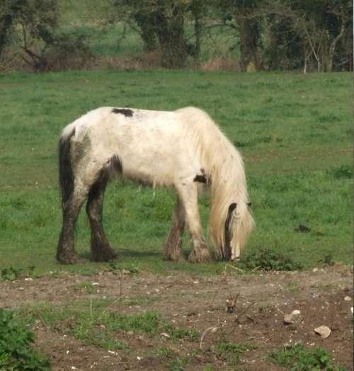 horse meadow field england fujifilm s9600