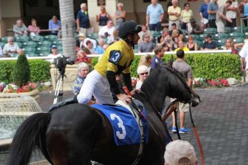 Racehorse trainer walking ring racetrack Jockey