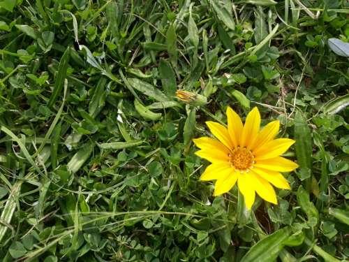 flower Australia pawankawan