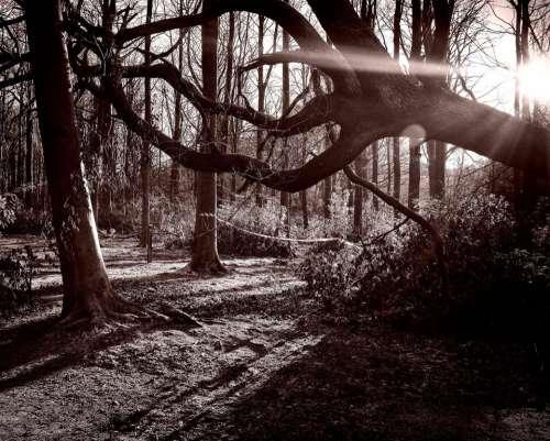 tree trees wood sun light