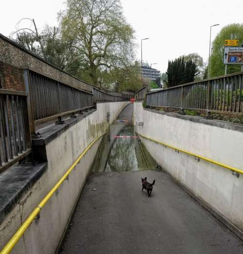 flooded underpass flooded footpath dog