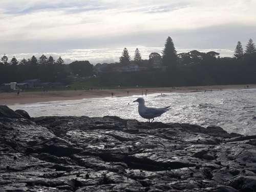 beach ocean seashore Australia