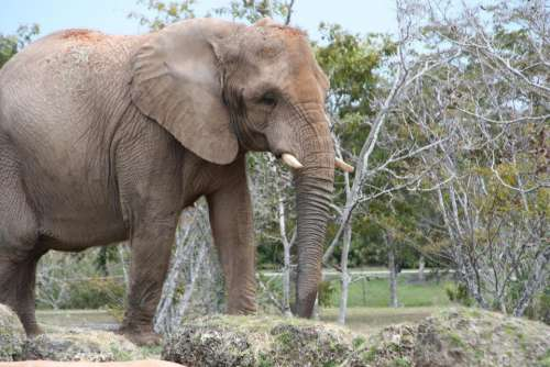 Elephant Wildlife Animal Africa #animals