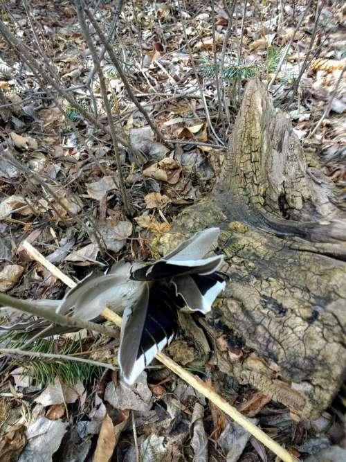 Tree stump feathers