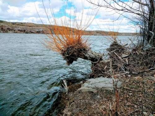 Tree stump river shore