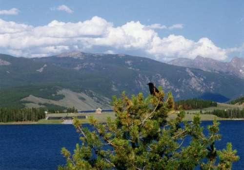 Mountains lake tree bird sky