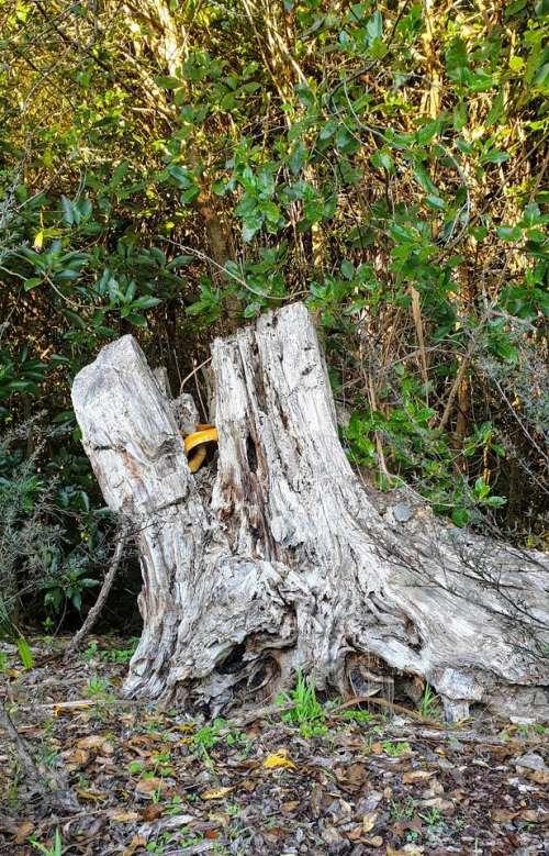 stump tree trees treestump nature