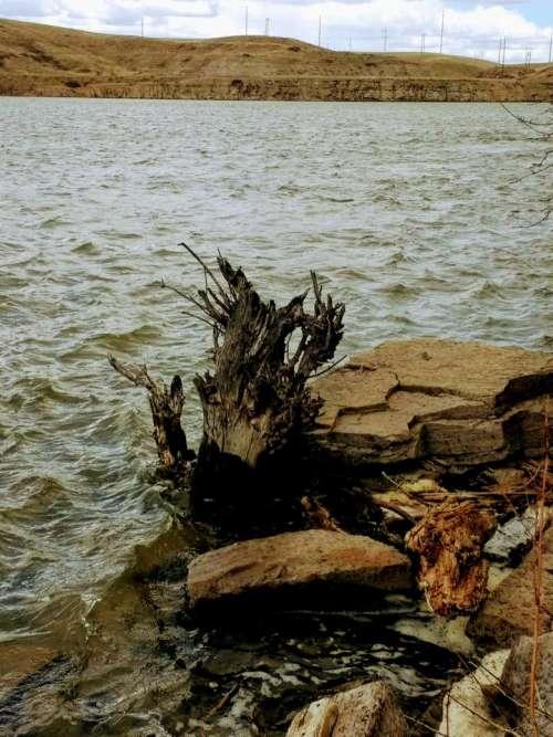 Tree stump shore river