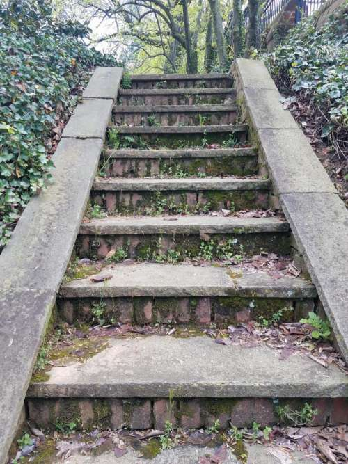 path stairs steps moss