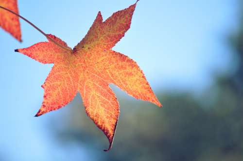 autumn leaves nature free image