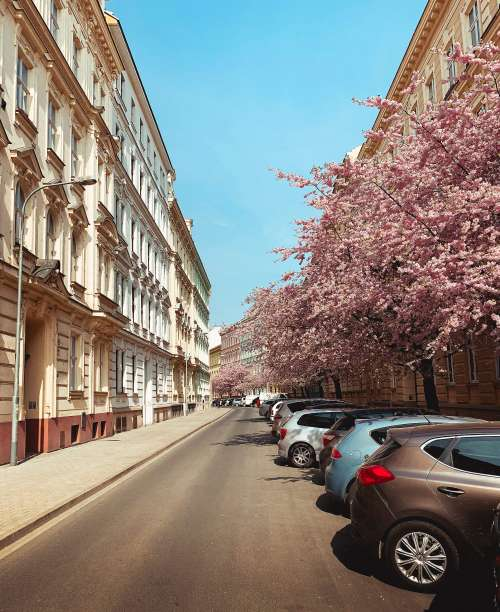 Street Full of Blooming Trees in Brno, Czechia