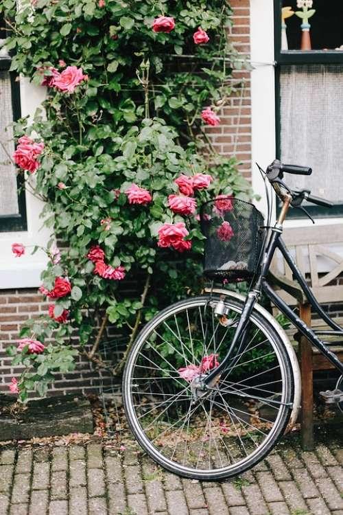 Amsterdam Bike Holland Flowers Roses Street