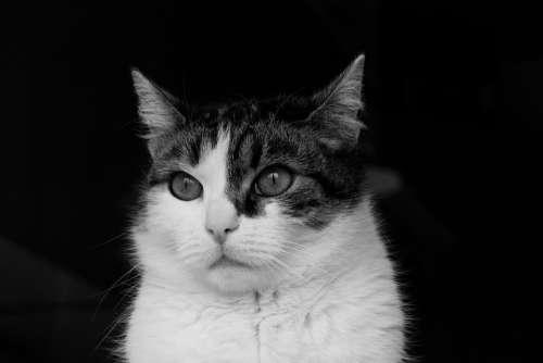 Animal Mammal Pet Nature Head Cat Predator Face