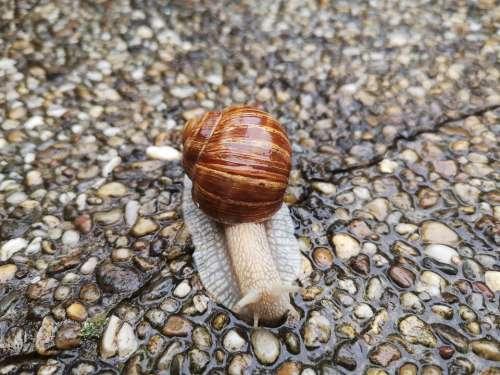 Animal Snail Biology Nature Fauna