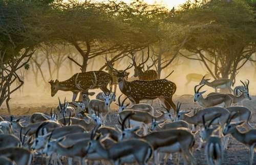 Animals Nature Fauna Wildlife Trees Sunset Deer