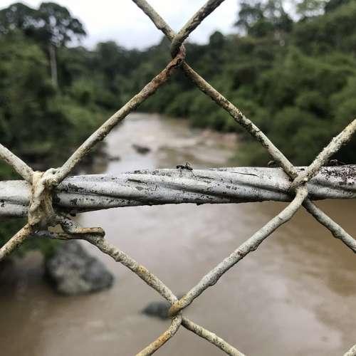Ant Fence Nature River Borneo Danum Danum Valley