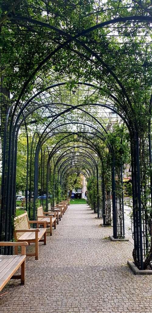 Avenue Trees Benches Park Czech Republic Pilsen