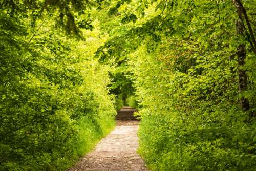 Away Nature Light Trees Path Landscape Forest