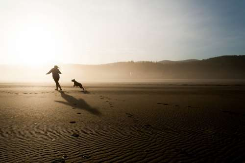 Beach Dog Chase Person Running Play Fun Happy