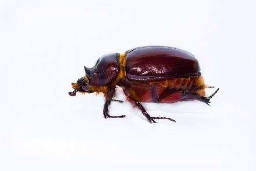 Beetle Insect Coleoptero Animals Ladybug Red Wild