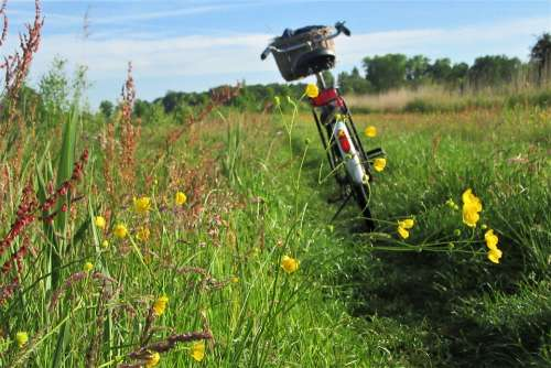 Bicycle Outdoor Flowers Morning Activity Nature