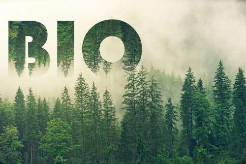 Bio Forest Nature Ecology Landscape Biology Fog