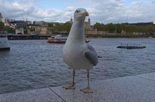 Bird Gull Birds Nature River Water Landscape
