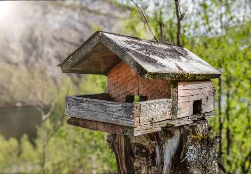 Bird Feeder Feeder Birdhouse Tree House Wood