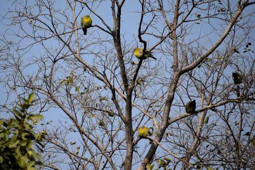 Birds Sitting Tree Branches Nature Animal Branch