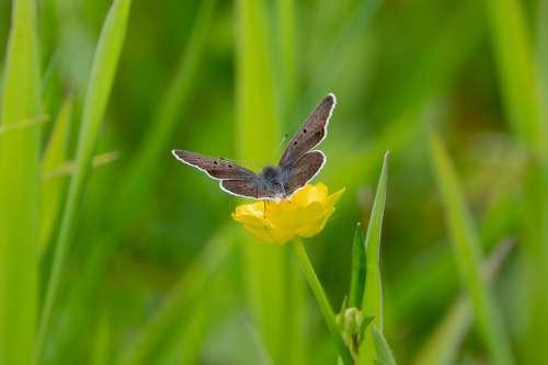 Blue Also Dark Brown Meadow Spring Nature Flower