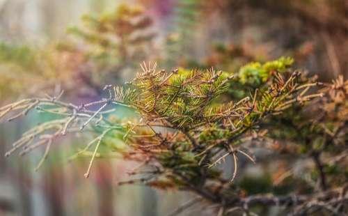 Branch Nature Fir Tree Plant Season Landscape