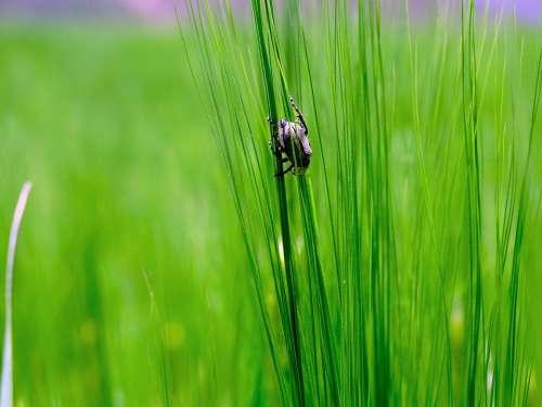 Bug Grass Green Nature Insect Pupa Ladybug