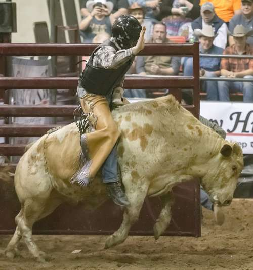 Bull Rodeo Cowboy Sport Bucking Competition Arena