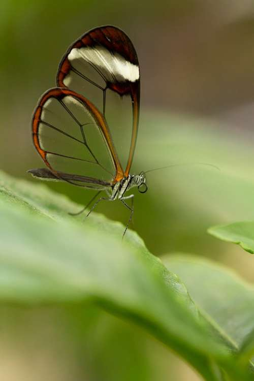 Butterfly Insect Animal Nature Macro Animal World