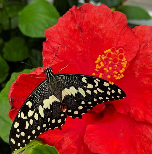 Butterfly Nature Insect Summer Colorful